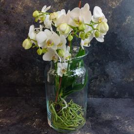 домашние горшечные цветы