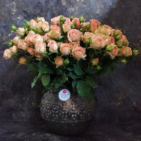 мелкие кустовые розы